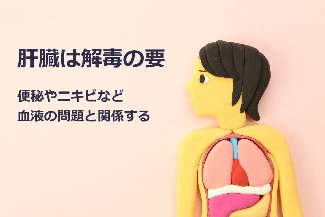 肝臓と肌荒れ