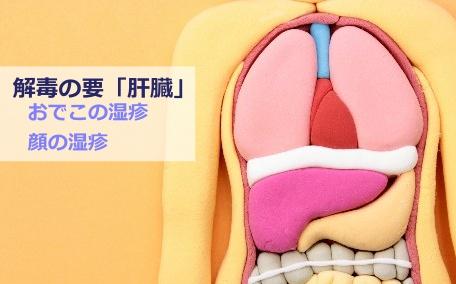 肝臓とアトピー