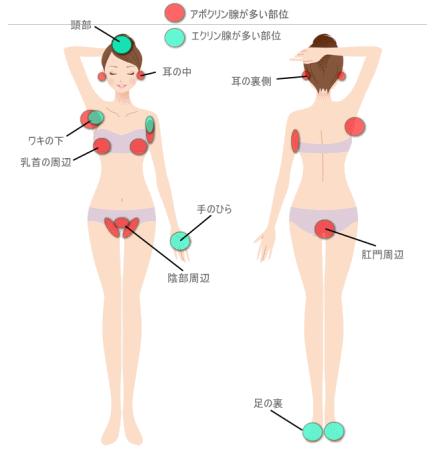汗腺とかゆみの部分