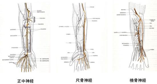 腕の神経と湿疹